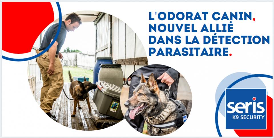 Odorat canin nouvel allié dans la détection parasitaire - punaises de lit